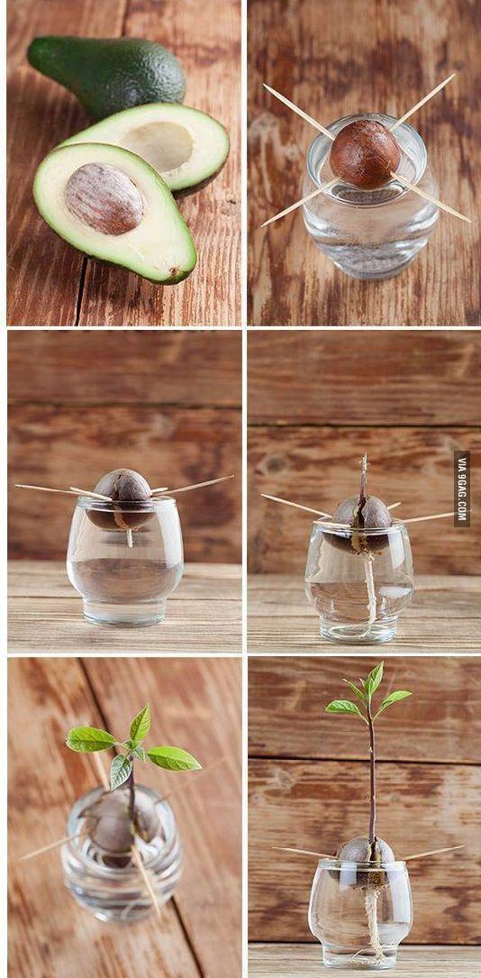 Excepcional Como fazer mudas decorativas de plantas em vasos   DECORAÇÃO  KS12