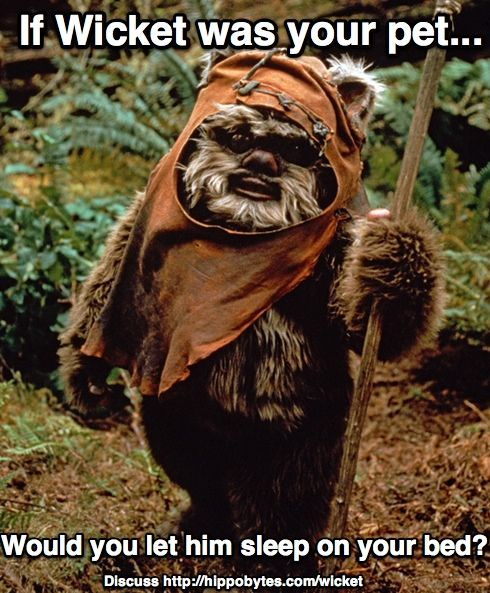 Wicket The Ewok From Star Wars Return Of The Jedi Is Creepy