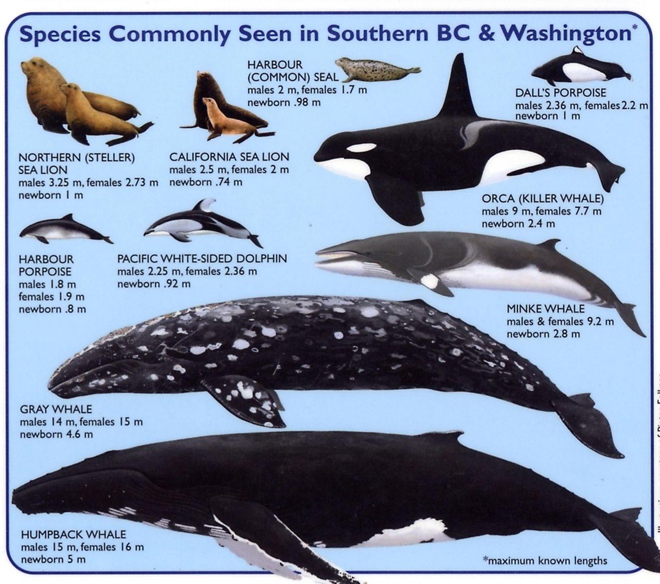 Animal Sea Mammal