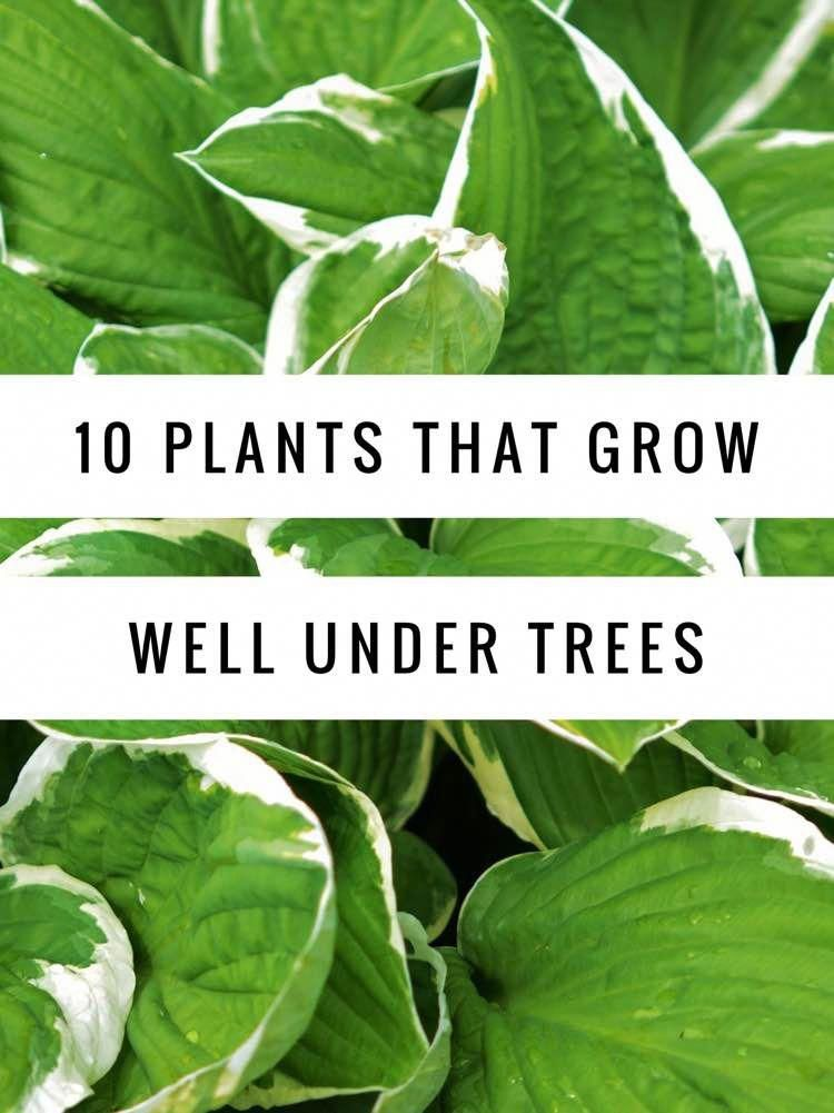 10 Plants That Grow Well Under Trees Landscape Design Pinterest