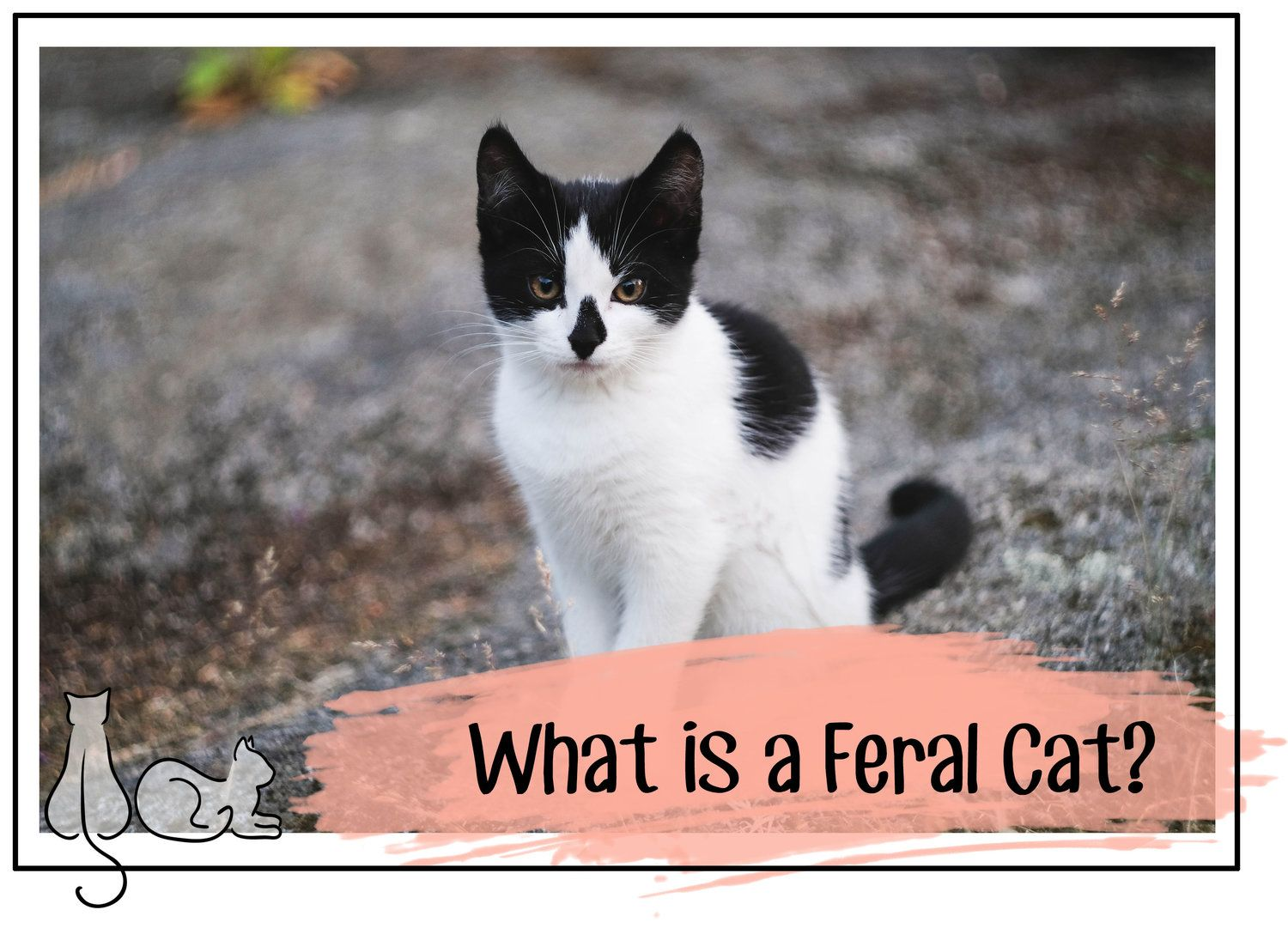 How to Identify Feral Cats Feral cats, Cats, Feral kittens