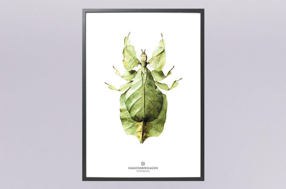 15x Eucalyptus Huis : Prachtige poster: wandelend blad zeer realistisch weergegeven
