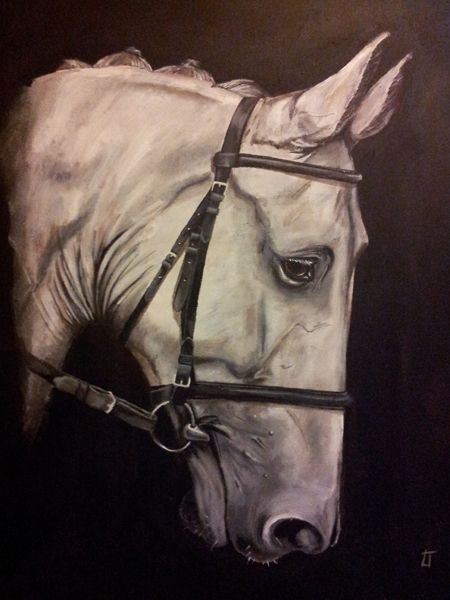 Lianne Tadd - Animal Portrait Painter - Grey Horse / Acrylic on deep edge canvas