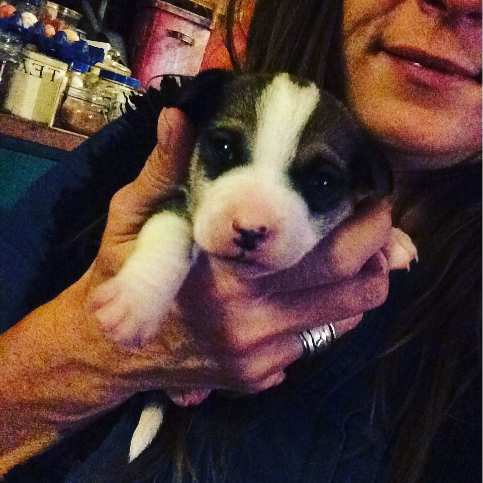 #puppy cuddle #terrierx #terrierlove #terriersofinstagram #terrier