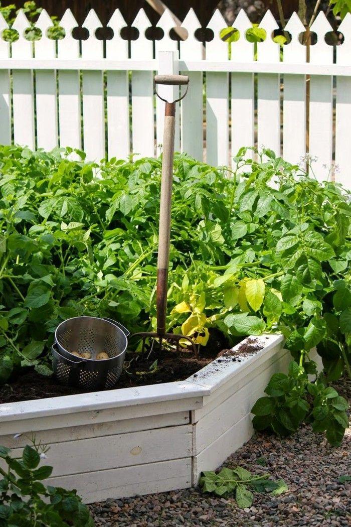bauerngarten garten mit kräutern und gemüse Gartengestaltung - vorgarten gestalten mit kies und grasern