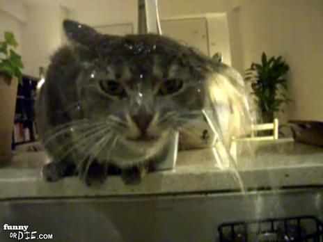 Adorable Little Kitteh Www Funnyordie Com Videos C2f3e6adfb Cat Loves Water Cat Drinking Cat Love Cats