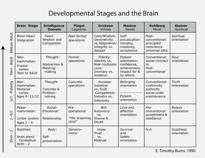 Developmental stages and the brain birth through adult functioning