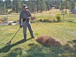 Uses For Pine Needles Pine Needles Pine Garden Paths