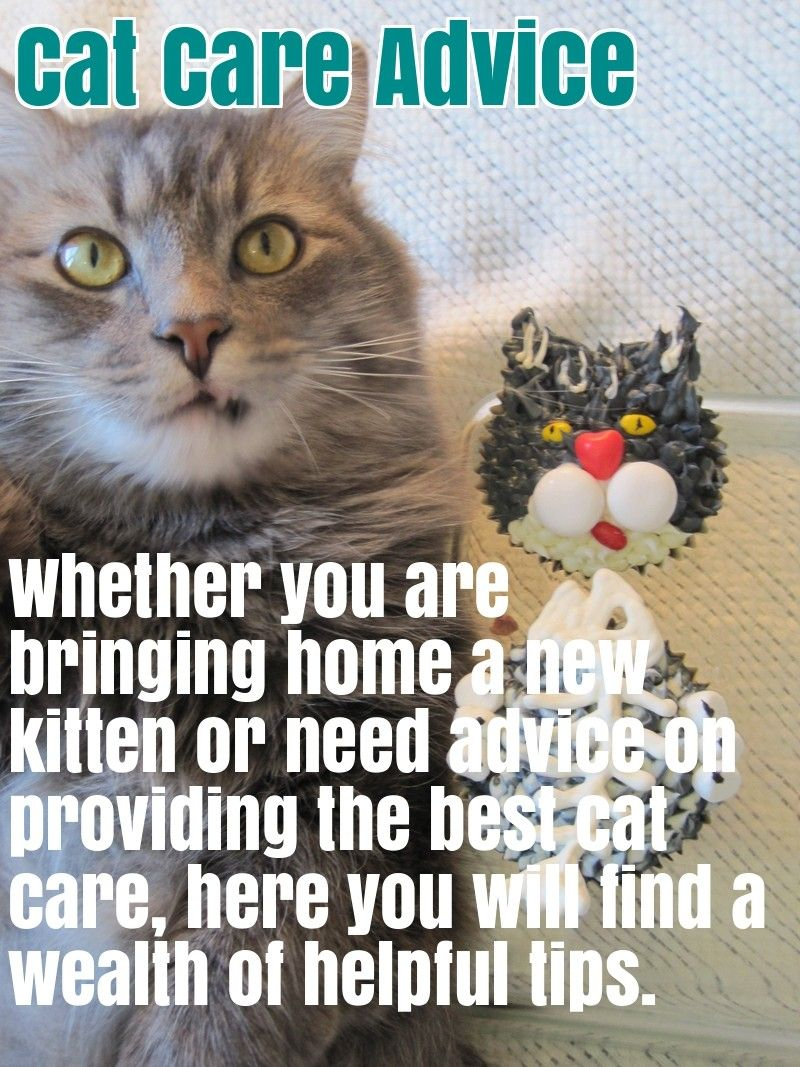 Comprehensive Cat Care Advice Cat Care Cats Cool Cats