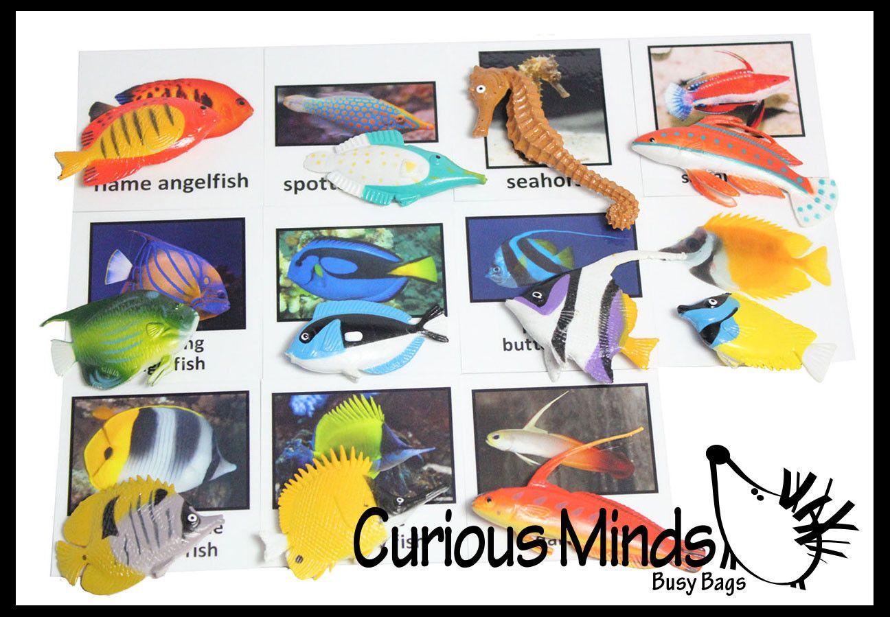 Montessori Tropical Fish Object Match