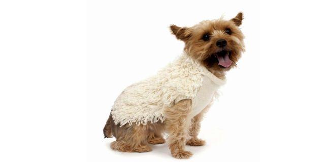 Posh+Pup:+The+Chicest+Pieces+for+Your+Dog's+Wardrobe  - HarpersBAZAAR.com