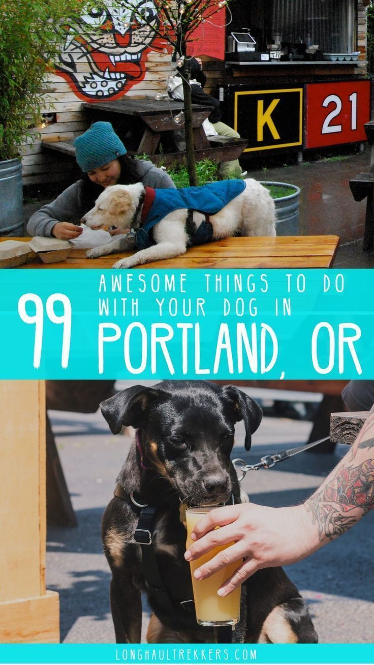 99 awesome things to do with your dog in portland or