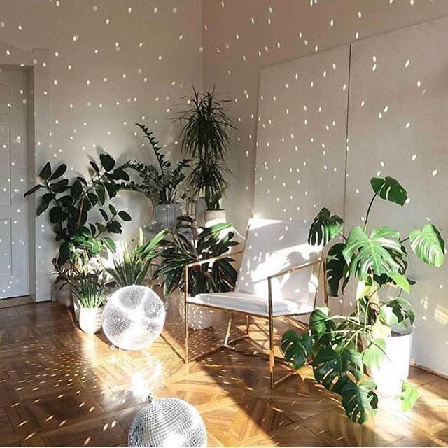 "10.6b Beğenme, 75 Yorum - Instagram'da The Sill (@thesill): ""Party plants @from_milla via @botanicalsbybella #gohomeyouredrunk"""
