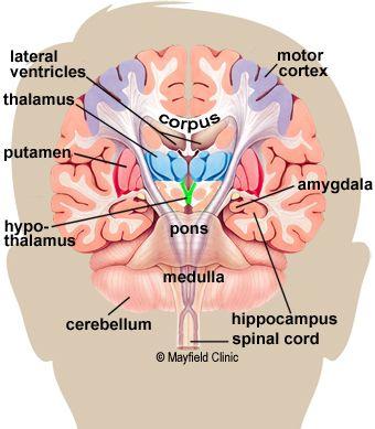 12+ Mayfield Brain & Spine