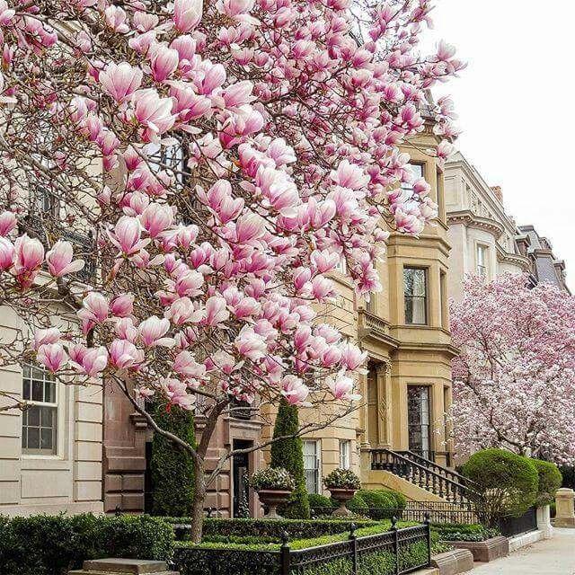 Cape Cod Spring: .~Spring In Boston~.