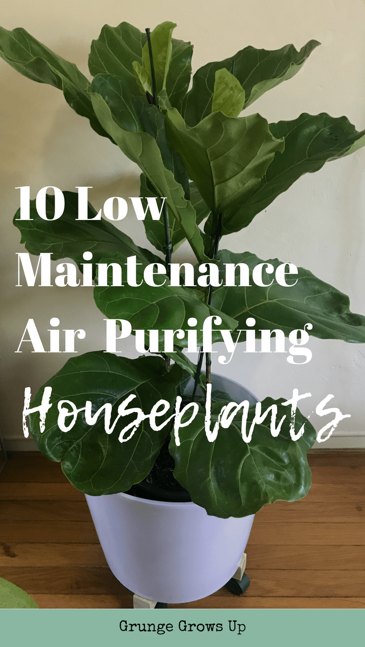 Low Maintenance Air Purifying House Plants (With images