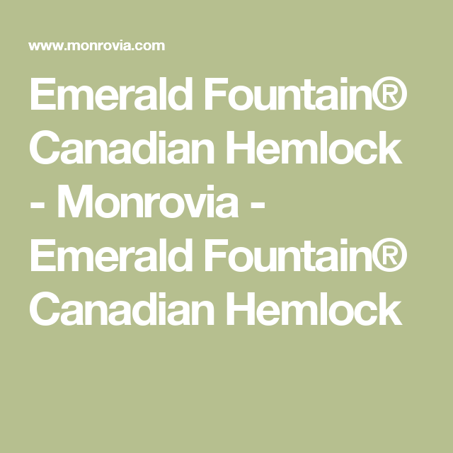 Emerald Fountain® Canadian Hemlock - Monrovia - Emerald Fountain® Canadian Hemlock