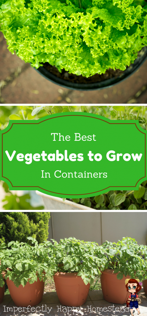Vegetables In Pots The Best Veggies To Grow In Containers 640 x 480