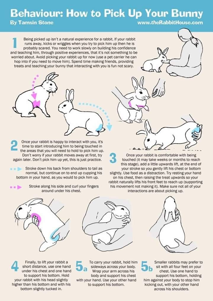 Pin By Trish Deras On Future Pet Bunny Rabbits Pet Bunny Bunny Cages