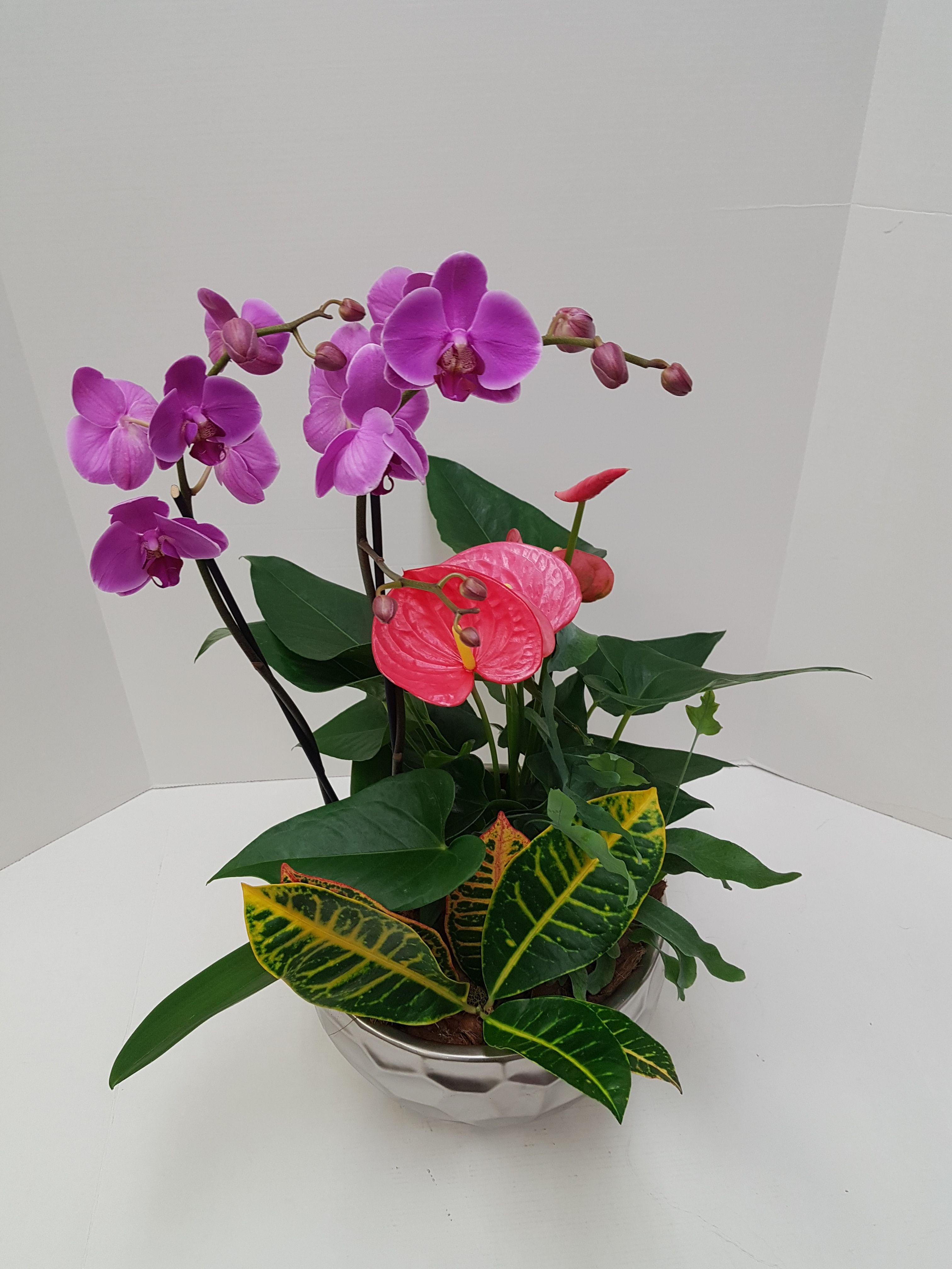 Check out this beautiful tropical planter with an Orchid