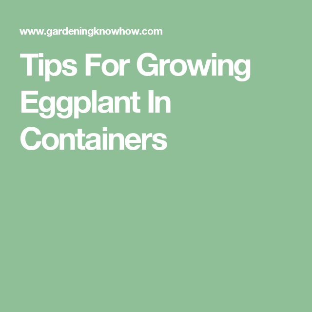 How To Container Grow Eggplant Plants