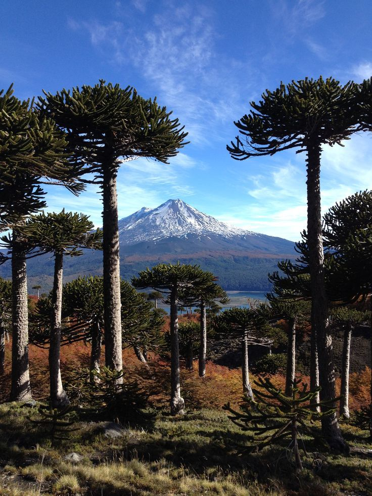 Conguillio National Park in Southern Chile in Autumn