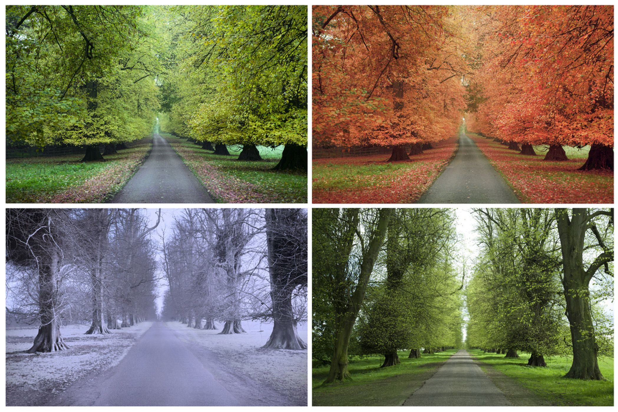 The Four Seasons Change Marks The Passing Of A Year
