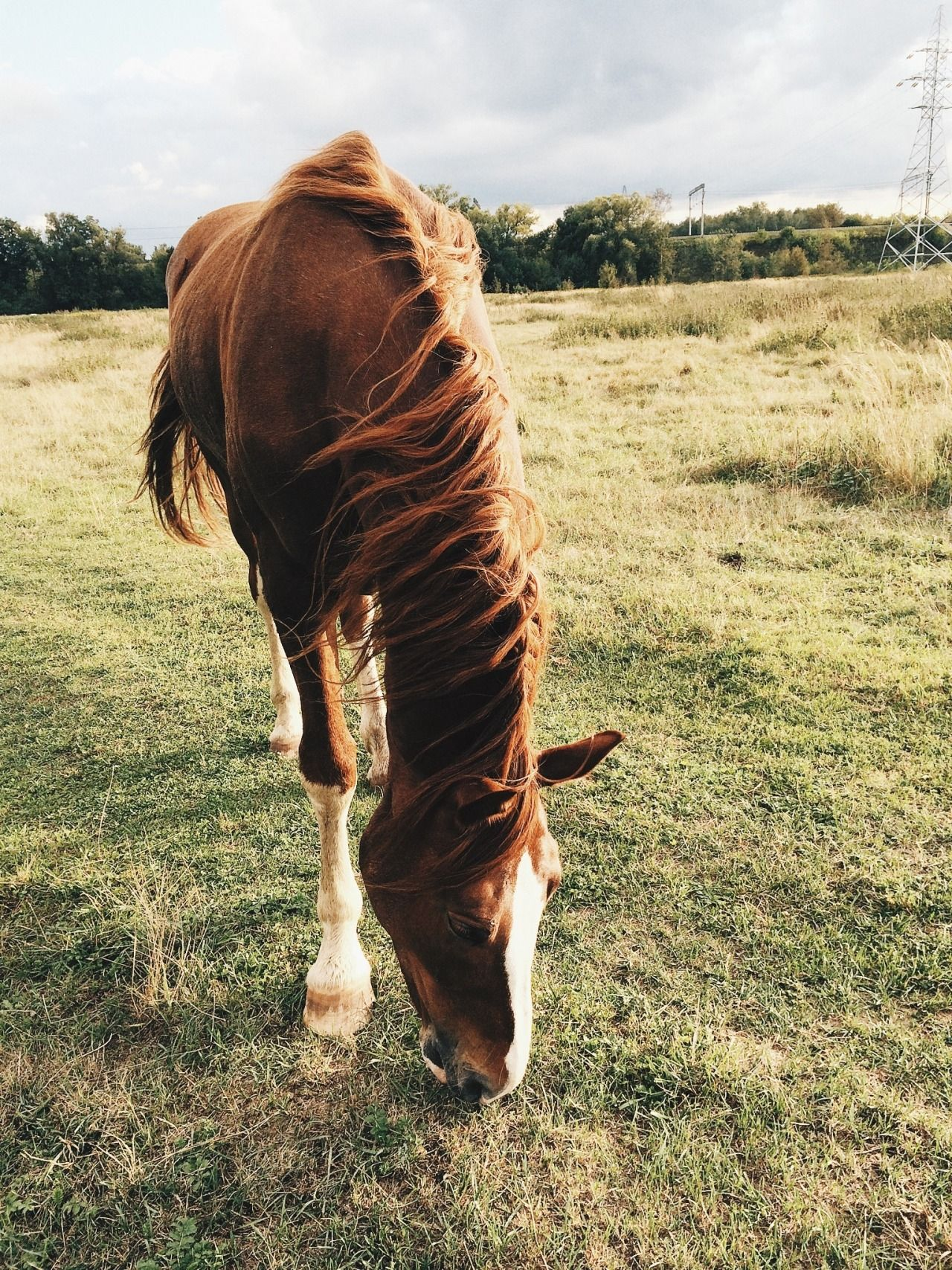 Pin by Alana Ross on PONIES Horses, Animals beautiful