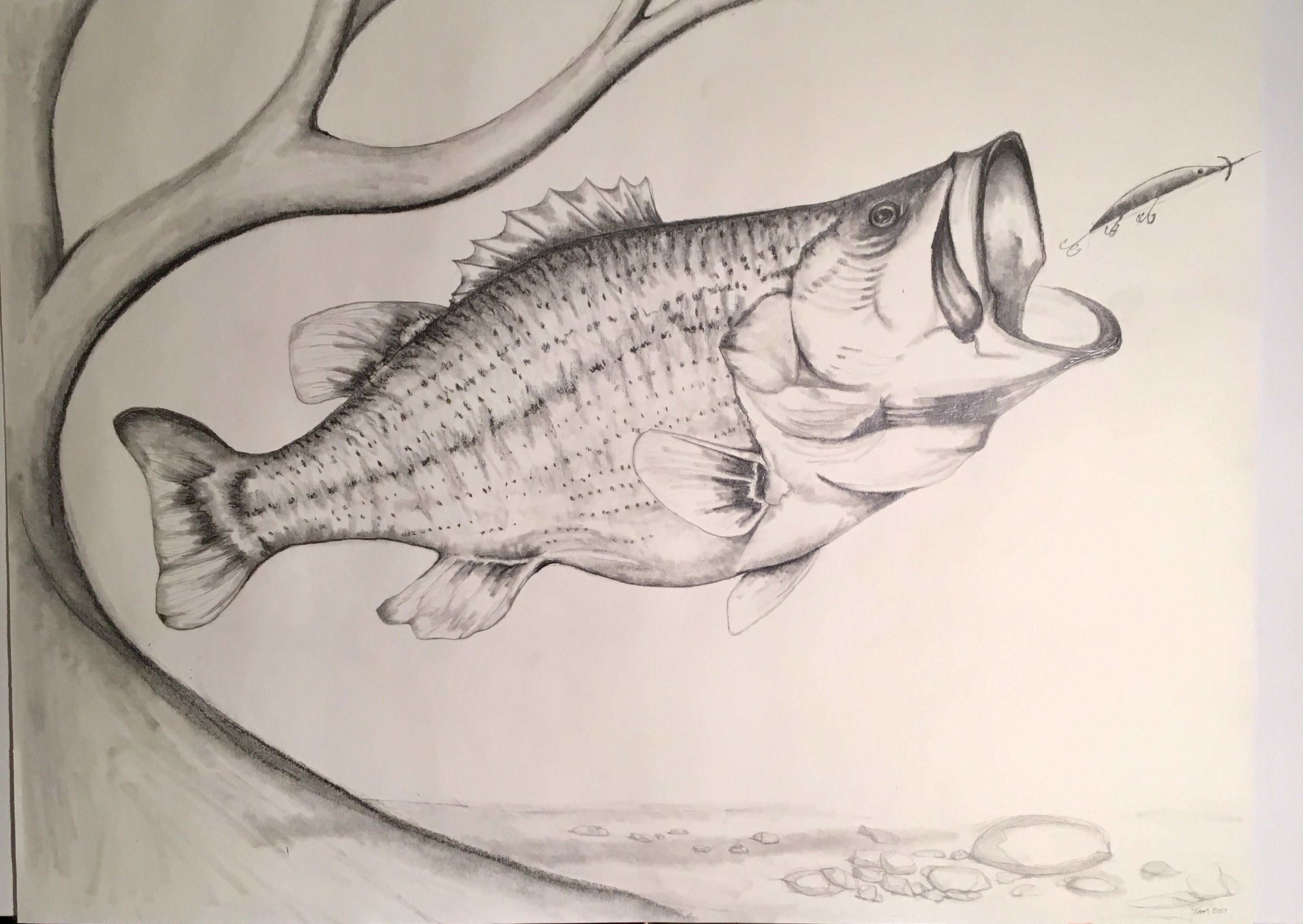Largemouth Bass Spots A Potential Meal Pencil Sketch Drawing Fish Art Fish Drawing Fish Sketch Bass Art Www Etsy Com Fish Sketch Fish Drawings Drawings