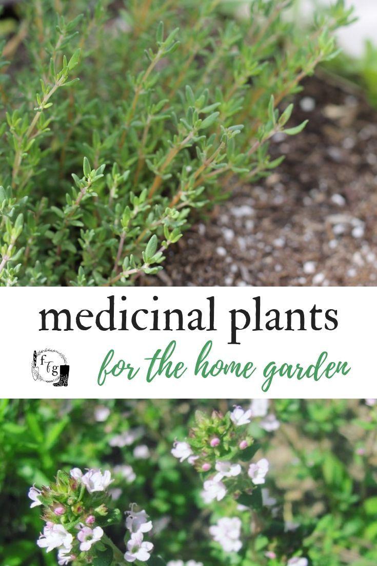 Plant a Medicinal Herb Garden #herbsgarden