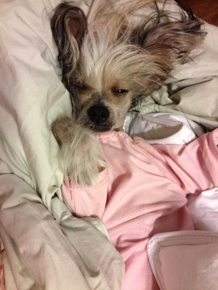 Don't disturb Me...Crested Love