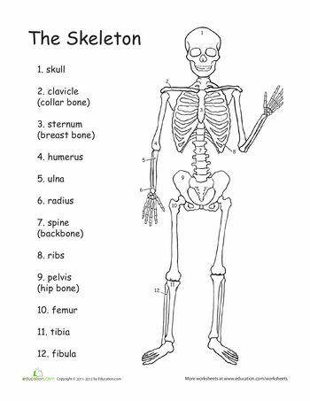 The Skeleton Worksheet Hoja De Trabajo Del Esqueleto Science