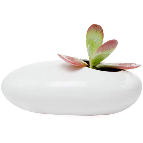 Dot & Bo White Pebble Plant Holder ($19) ❤ liked on Polyvore featuring home, home decor, floral decor, plants, fillers, decor, deco, white home accessories and white home decor