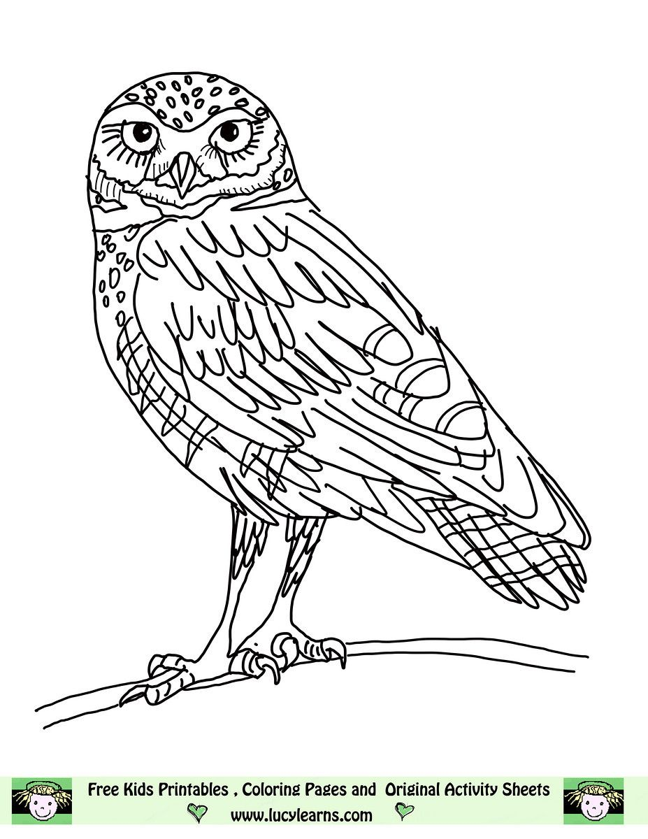 Owl Coloring Pages Free Printables Lucy Learns Page Elf