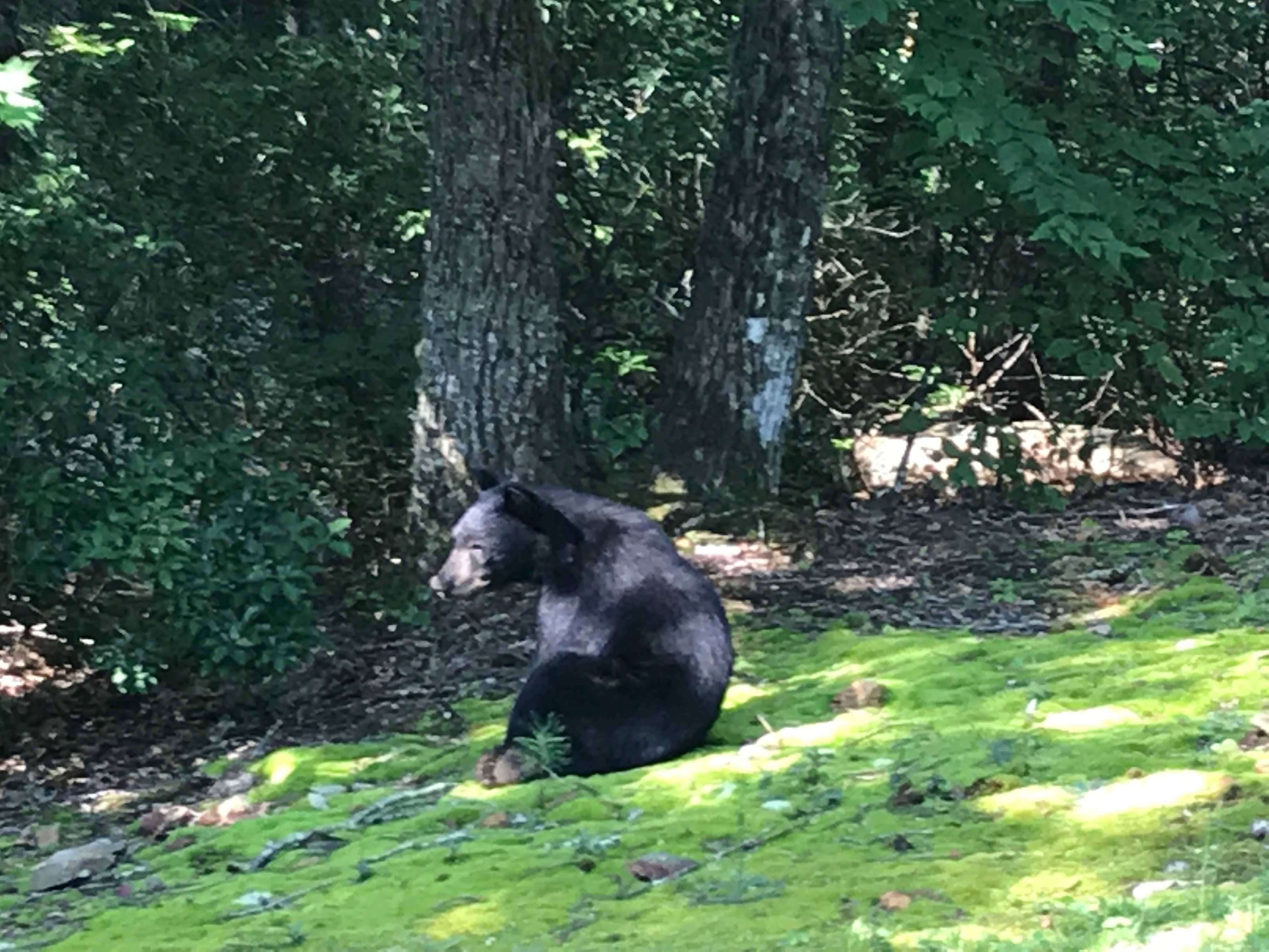 I think this was the bear that was riding the hammock last