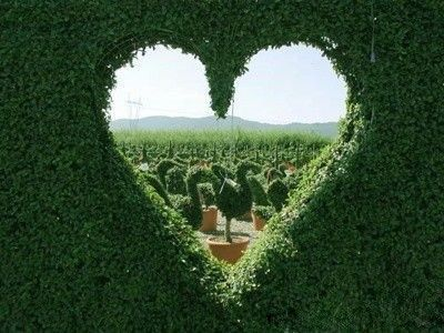 Heart-shaped-garden-design consider for opening into the right shadow box?7-27