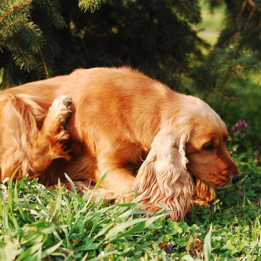 8 natural ways to treat dry and itchy skin in dogs dog