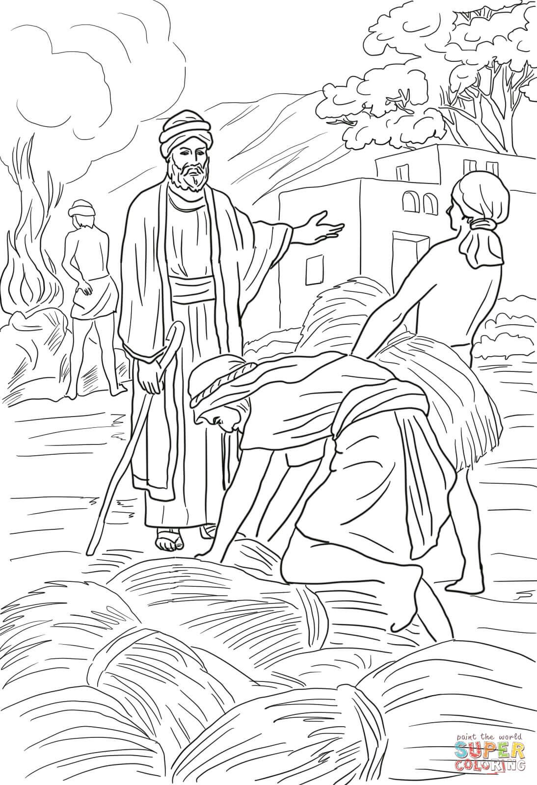 Parable Of The Wheat And Weeds Super Coloring Bible Coloring
