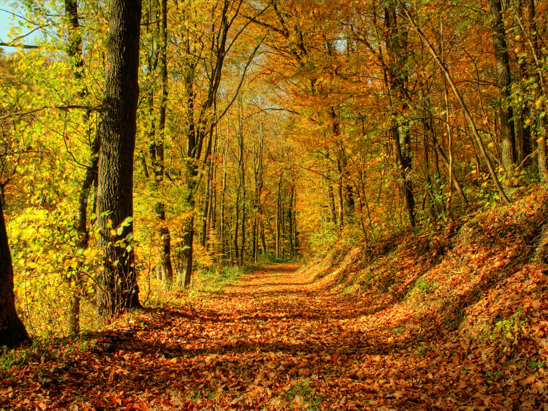 Wallpaper Collection 37 Free Hd Fall Desktop Backgrounds Background To Download And Use Pc Mobile Tablette En 2020 Fond Ecran Paysage Fond D Automne Foret D Automne