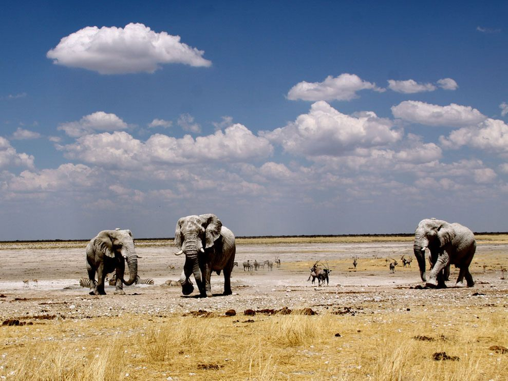 This shot was taken just before the rainy season in Etosha National Park, Namibia, during an internship for the World Wildlife Fund-Namibia Chapter.