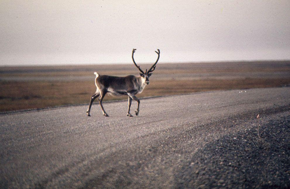America in the 1970s: The Pacific Northwest - In Focus - The Atlantic