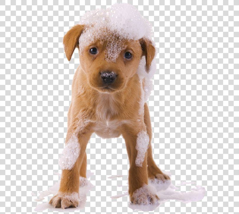 Cider Dog Grooming Pet Sitting Puppy Dogs Png Free Download Dog Grooming Pets Puppies