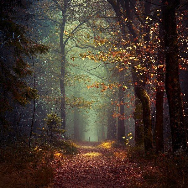 Autumn Forest | by Tvurk