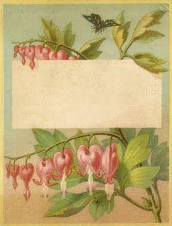 Lovely vintage bleeding hearts free printable. # vintage #flowers #printable #free
