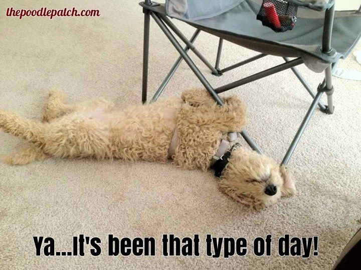 YA ITS BEEN THAT TYPE OF DAY!!!