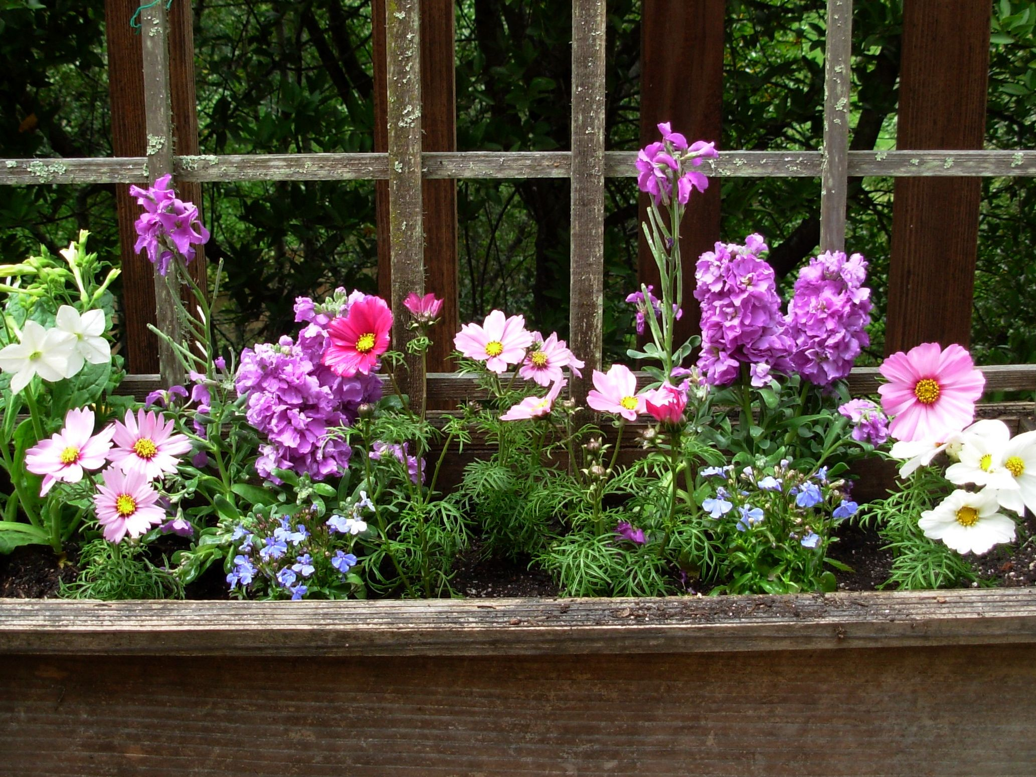 Old Fashioned Flowers For Garden Stock Flower Images Pinterest
