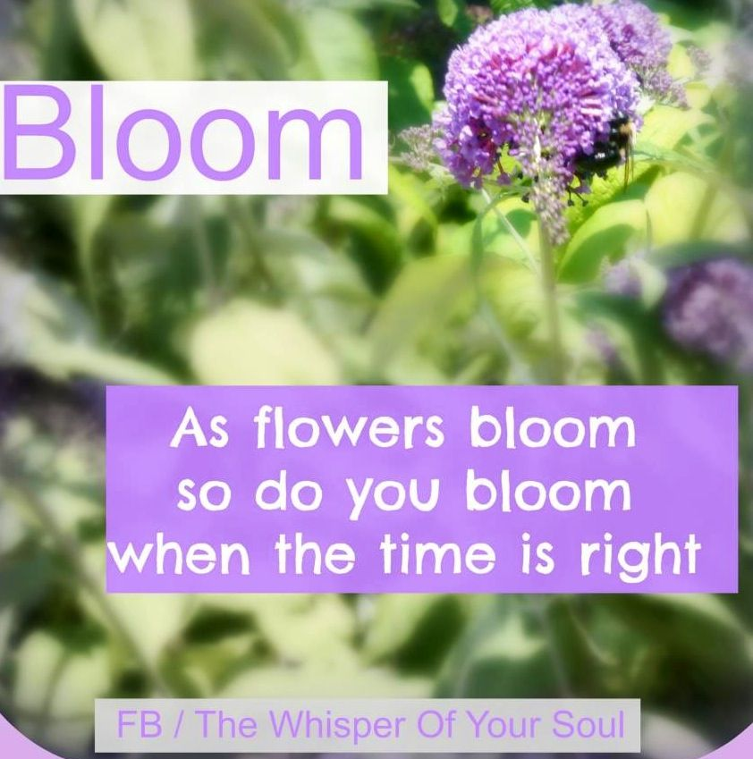 bloom like flowers quote via facebook com thewhisperofyoursoul