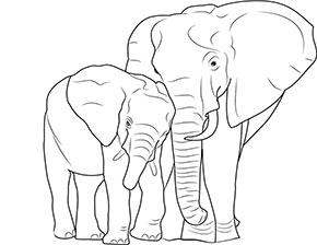 Ausmalbild Elefant Und Baby Im Zoo Zootiere Ausmalbilder Tiere Ausmalen