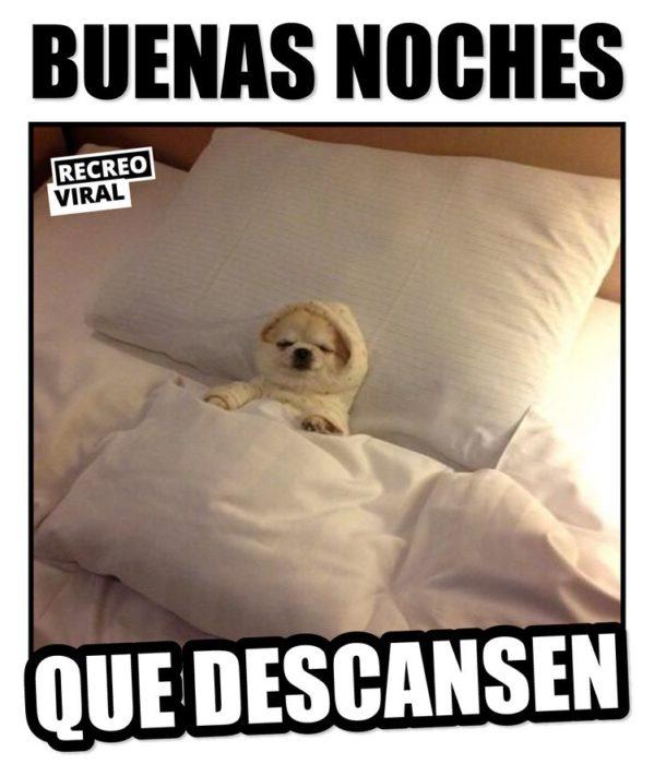 17 Memes Que Son Mejor Que Un Simple Buenas Noches Buenas Noches Meme Imagenes De Buenas Noches Graciosas Gracioso