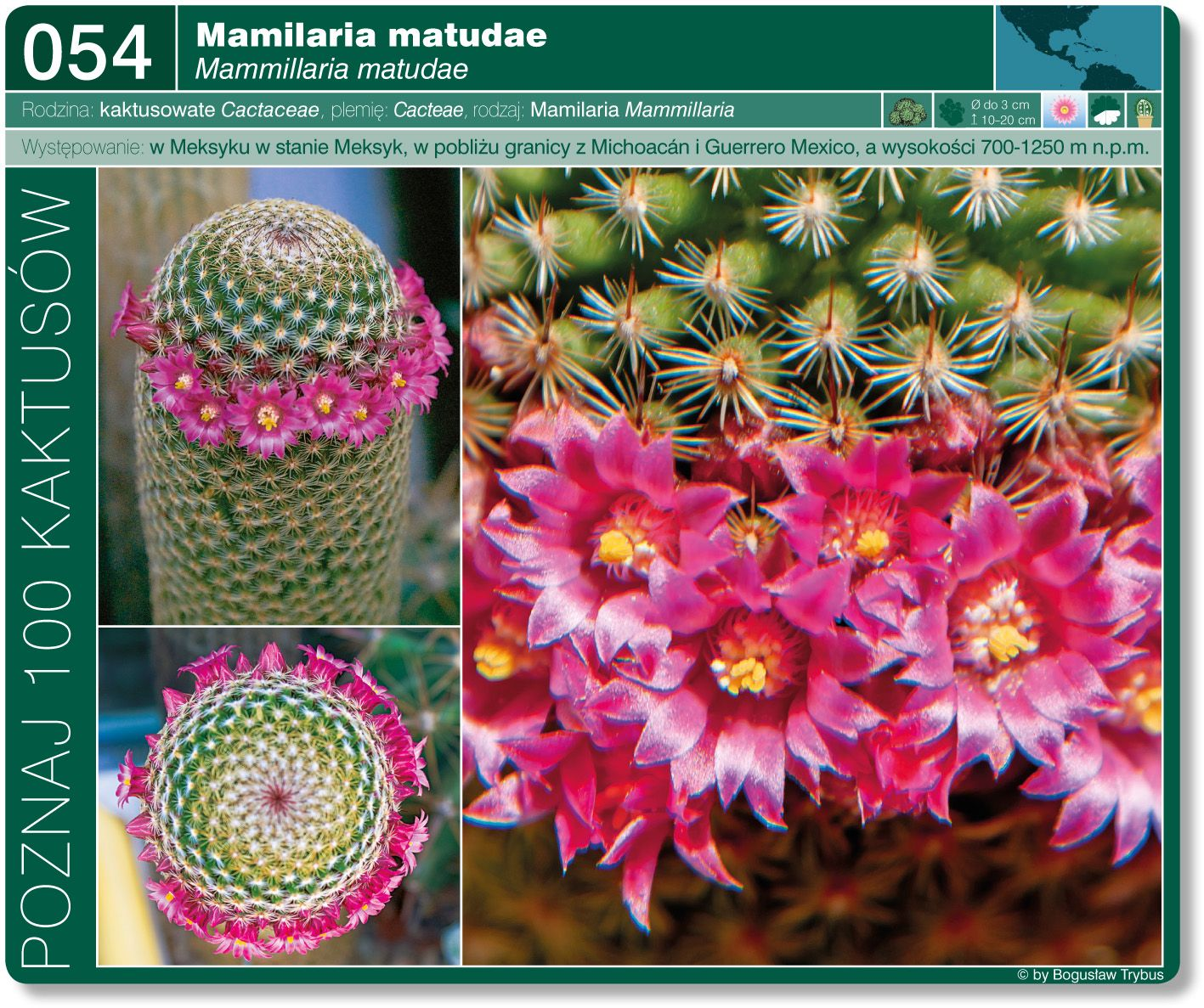 Mammillaria Matudae Crochet Earrings Crochet